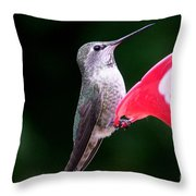 Hummingbird 23 Throw Pillow