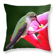 Hummingbird 33 Throw Pillow
