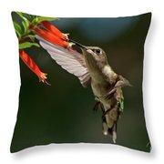 Hummingbird #5 Throw Pillow