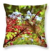 Hummingbird And Firespike Throw Pillow
