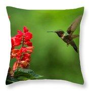 Hummingbird And Scarlet Sage Throw Pillow