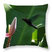 Hummingbird At Banana Flower Throw Pillow by Camilla Brattemark