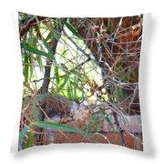 Hummingbird Babies Throw Pillow