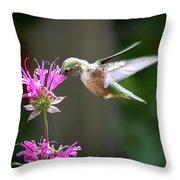 Hummingbird Beauty Throw Pillow