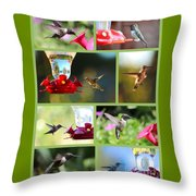 Hummingbird Collage 2 Throw Pillow