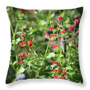 Hummingbird Drinking From Red Trumpet Vine Throw Pillow