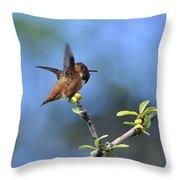 Hummingbird Feeling Frisky 1 Throw Pillow