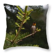 Hummingbird Flashing Throw Pillow