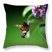 Hummingbird Hawk Moth - Five Throw Pillow
