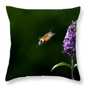 Hummingbird Hawk Moth - Three Throw Pillow