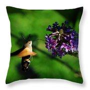 Hummingbird Hawk Moth 2 Throw Pillow