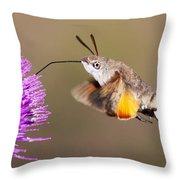 Hummingbird Hawk-moth  Throw Pillow