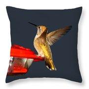 Hummingbird In My Window Throw Pillow