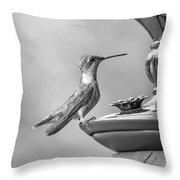 Hummingbird Intrigue  Throw Pillow