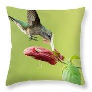 Hummingbird Nose Dive Throw Pillow