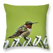 Hummingbird On A Fence Throw Pillow