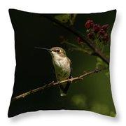 Hummingbird On Blackberry Bush Throw Pillow