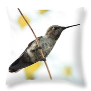Hummingbird On Tightrope Throw Pillow