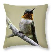 Hummingbird Portrait Square Throw Pillow
