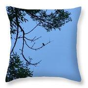 Hummingbird Silhouette Throw Pillow