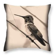 Hummingbird With Old-fashioned Frame 3 Throw Pillow