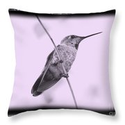Hummingbird With Old-fashioned Frame 4 Throw Pillow
