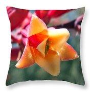 Hummingbird Yucca Throw Pillow