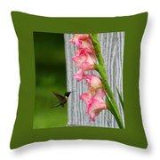 Hummingbird1 Throw Pillow