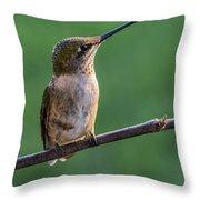Hummingbird's Quick Tongue Throw Pillow