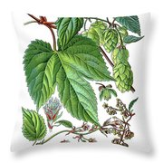 Humulus Lupulus, Common Hop Or Hop Throw Pillow