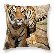 Hunger Tiger Throw Pillow