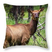 Hungry Elk Throw Pillow
