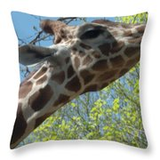 Hungry Giraffe Throw Pillow