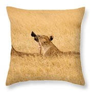 Hungry Lions Throw Pillow