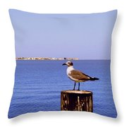 Hungry Sea Gull Throw Pillow