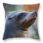 Sea Lion Throw Pillow