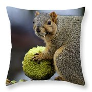 Hungry Squirrel 1 Throw Pillow