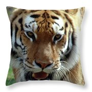 Hungry Tiger Throw Pillow