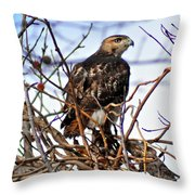 Hunting Red-tailed Hawk Throw Pillow