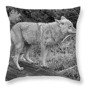 Hunting With Ears Back Black And White Throw Pillow