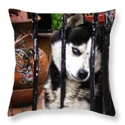 Husky Leo Focused Throw Pillow