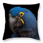Hyacinth 363 On Black Square Throw Pillow
