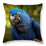 Hyacinth 363 Throw Pillow