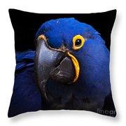 Hyacinth 375 Throw Pillow