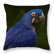 Hyacinth 446 Throw Pillow