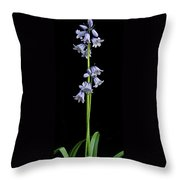 Hyancinth Throw Pillow