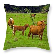 Hybrid Cattle On The Deseret Ranch In East Central Florida Throw Pillow