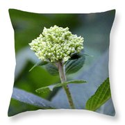 Hydrangea Bud Throw Pillow