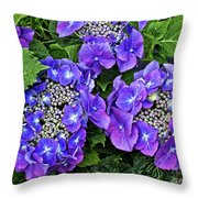 Hydrangea, Macrophylla Teller Throw Pillow