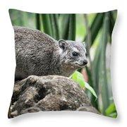 Hyrax Throw Pillow
